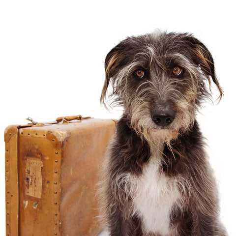 Dog sitting sadly with suitcase