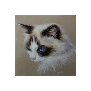 Wild Poppy Cat Greeting Card