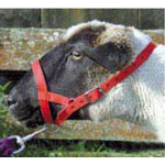 Webbing Sheep Halter