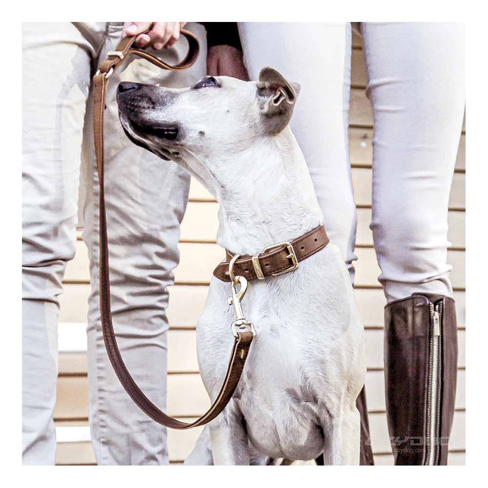 EzyDog Oxford Leather Classic Collar