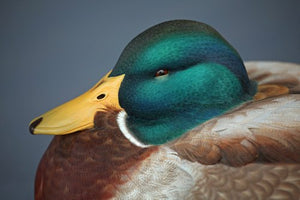 A Legacy Preserved: Contemporary Louisiana Decoy Carvers