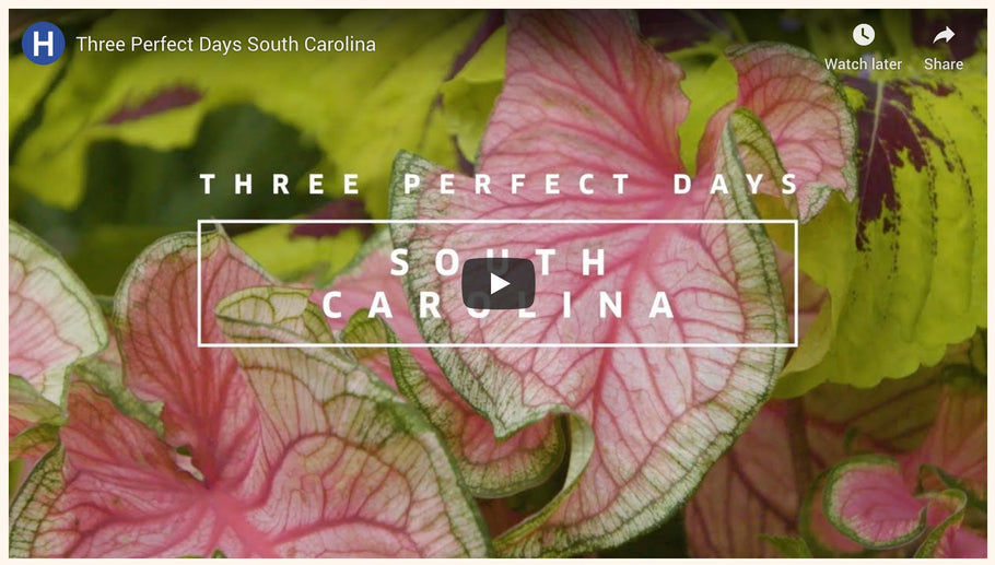 "Beaufort Featured in Hemispheres Magazine ""3 Perfect Days: South Carolina"""