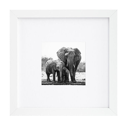 8x8 White Picture Frame Matted To Fit Pictures 4x4 Inches Or 8x8