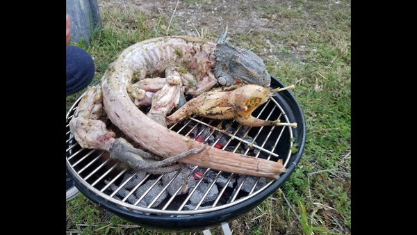 Iguanas Being Sold For BBQ MEAT in Florida!