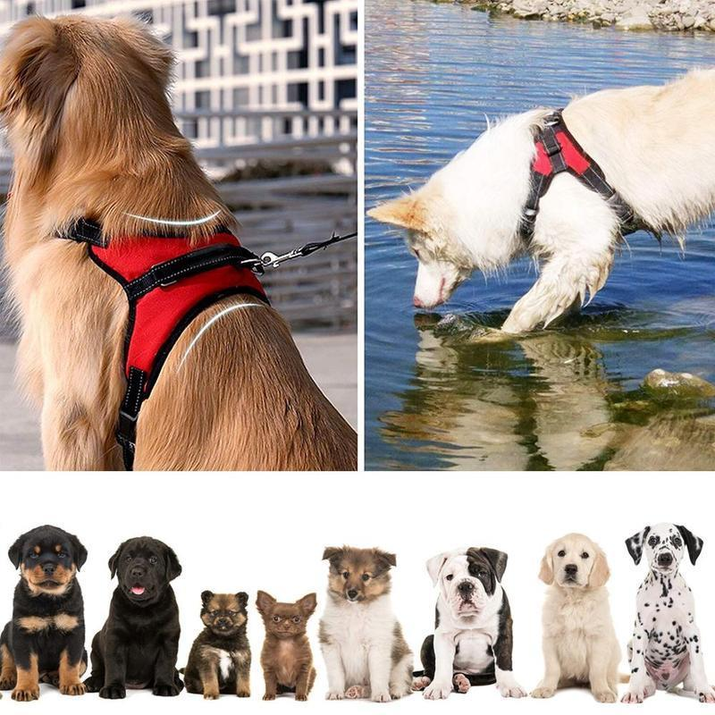 Hirundo No-Pull Dog Harness, Adjustable Harness for Medium and Large Dogs - PAPA BEAR HOME