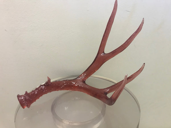 Wild & Precious Single Antler