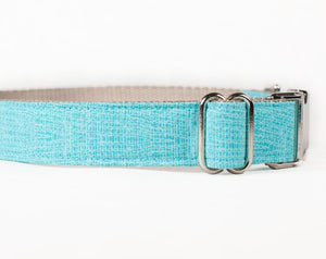 Small dog training collar in Aqua, perfect for Spring