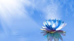 Lotus flower on blue background