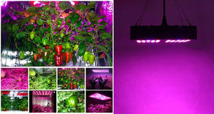 Plant Grow Light - Full Spectrum LED 600W  - UntilGone.com
