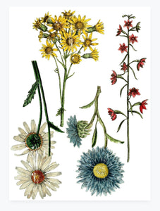 Bright Sunflower Botanical Transfer