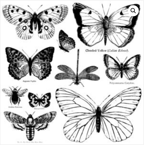 Pre order BUTTERFLIES 12×12 DECOR STAMP™