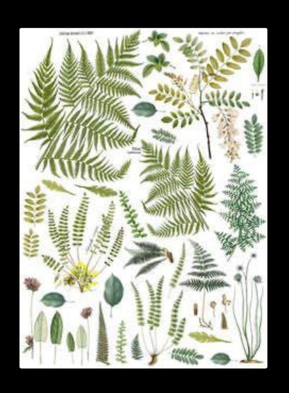 Fronds Botanical Transfer