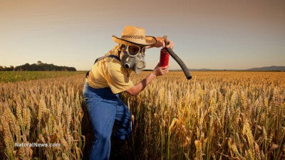 Wheat, Monsanto and Celiac Disease