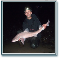 13lb 6oz Starry Smoothhound