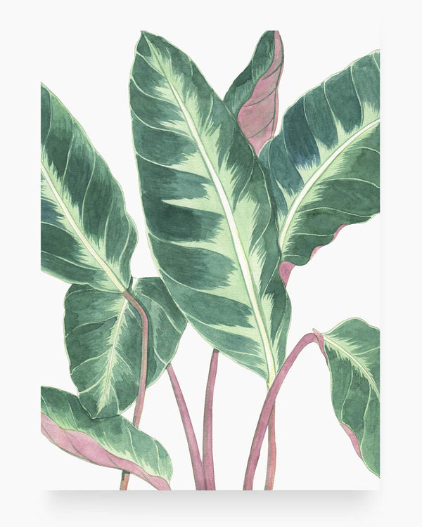 Foliage | Watercolour on hot press paper
