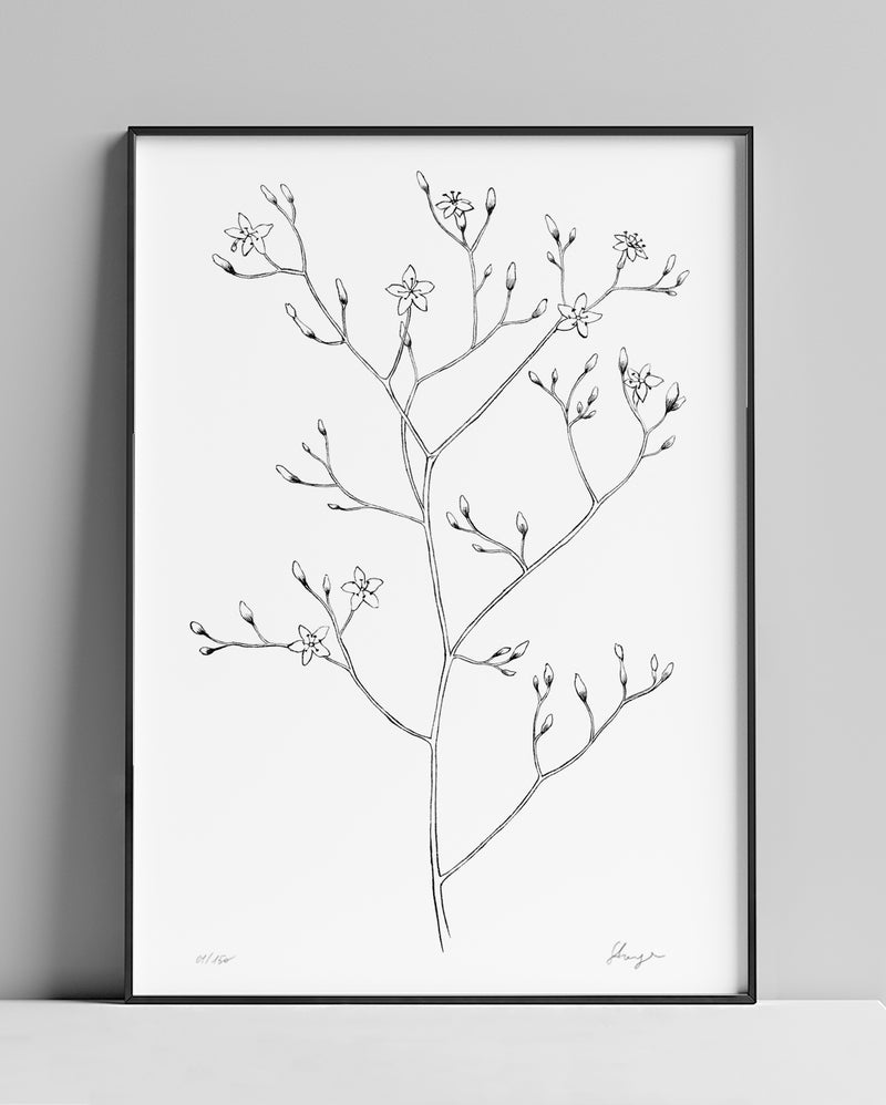 Wild flowers N.02 | A4 Limited Edition Giclée Fine Art Print