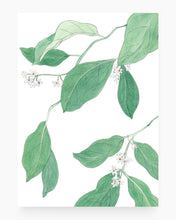 Load image into Gallery viewer, White blossoms n.01 | A4 Giclée Fine Art Print