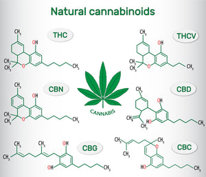 A World of Cannabinoids; Not just CBD and THC