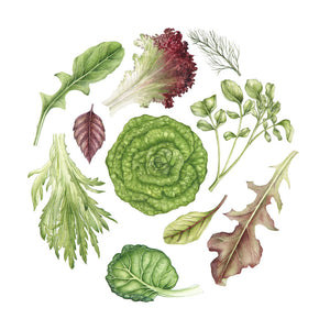 'Lettuce Leaves' Print