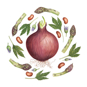 'Red Onion' Print