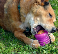 Cool Summer Treats Your Dog Will Love