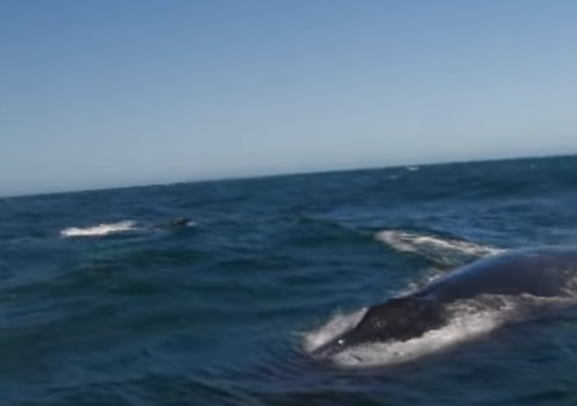 Whale Blows Out A Rainbow [VIDEO]