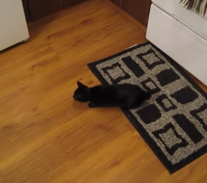 Even Cats Experience Serious Lag Time [VIDEO]
