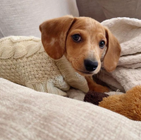 5 Must-Haves for the Puppy in Your Life