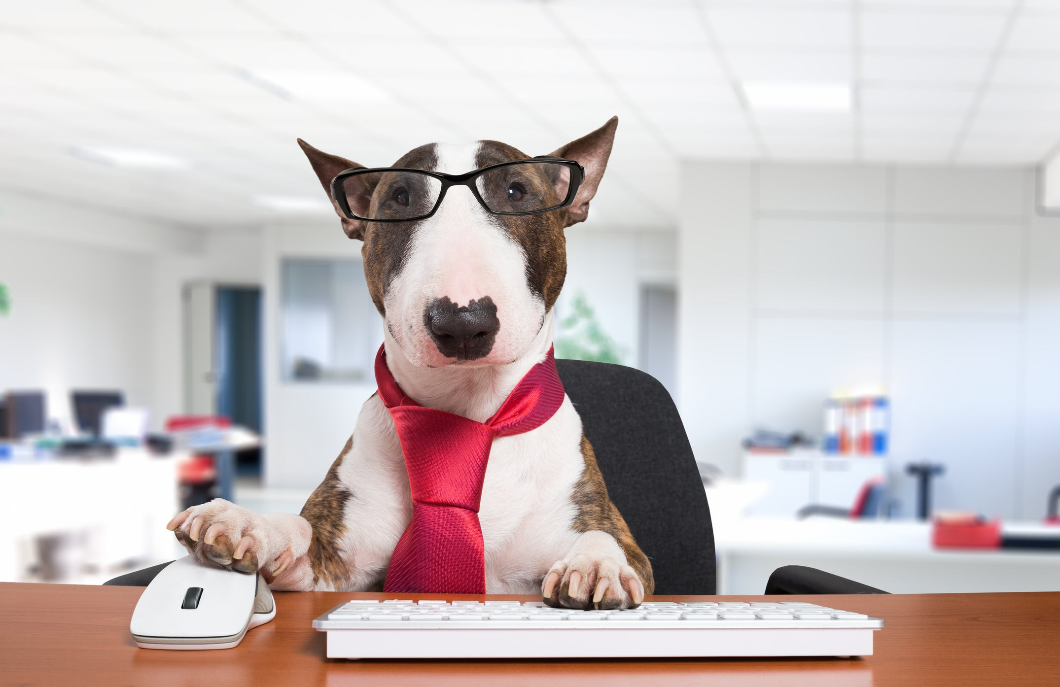 MUTT'S HAPPENING: Take Your Dog to Work Day!