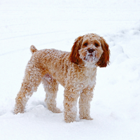 Expert Tips to Prepare Your Dog for Winter