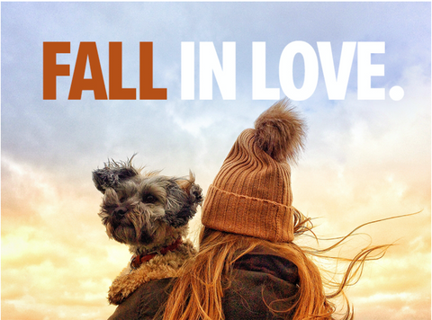 fall fashion for dogs