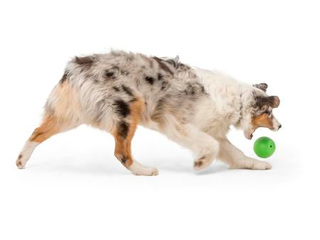 Rando Ball Dog Toy