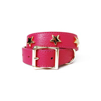 Gold Star Studs on Leather Dog Collar