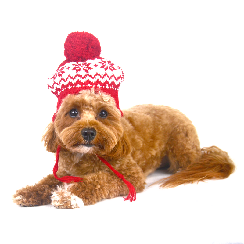 Fair Isle Snowflake Dog Hat - FINAL SALE