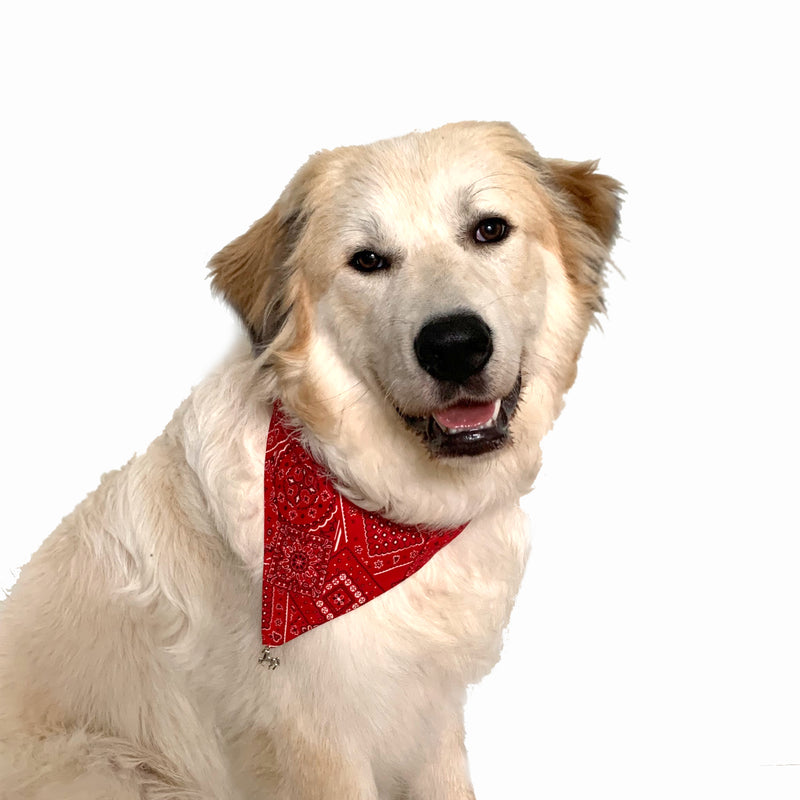 Traditional Red Reversible Pet Bandana
