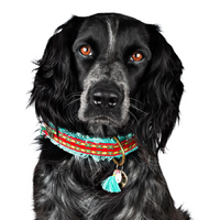 Ruby Woven Dog Collar