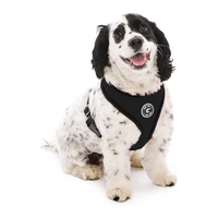 Soft Mesh Dog Harness