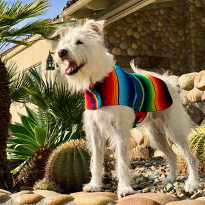 Zarape Stripe Dog Poncho