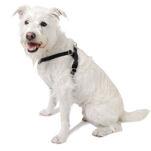Freedom Training Reflective Dog Harness