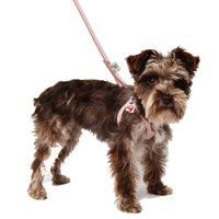 Premium Pebbled Leather Buddy Belt Dog Harness