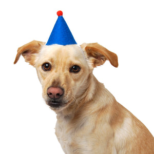 Birthday Dog Hat