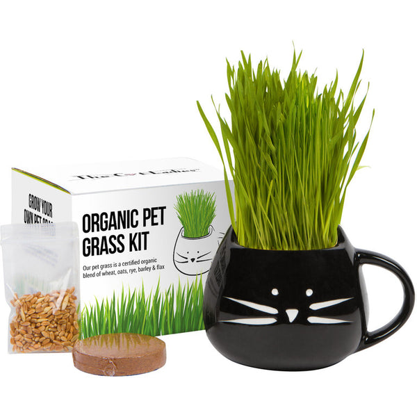 What's the deal with cats eating grass?