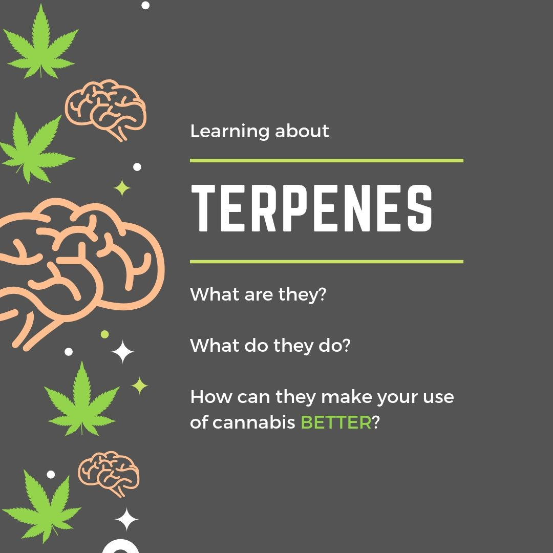 all about terpenes