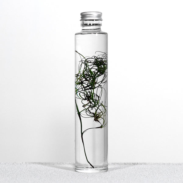 SlowPharmacy BOTTLE PLANTS No.10 Plants Designobjekt Geschenk giftidea