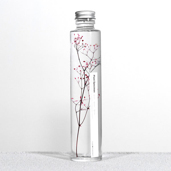 SlowPharmacy BOTTLE PLANTS No.13 Plants Designobjekt Geschenk giftidea