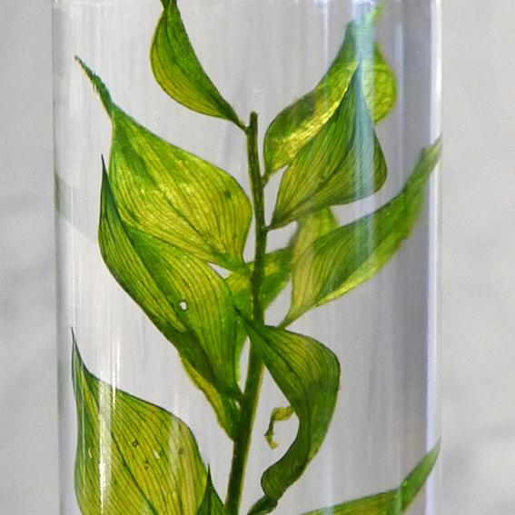 Slow Pharmacy, BOTTLE PLANTS-Large04, Plants, Design Objekt Geschenk