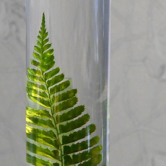 Slow Pharmacy, PLANT SPECIMEN-Large15, Plants, Design Objekt Geschenk