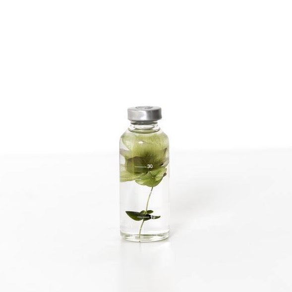 SlowPharmacy SMALL BOTTLE PLANT No02 Plants Designobjekt Geschenk gift