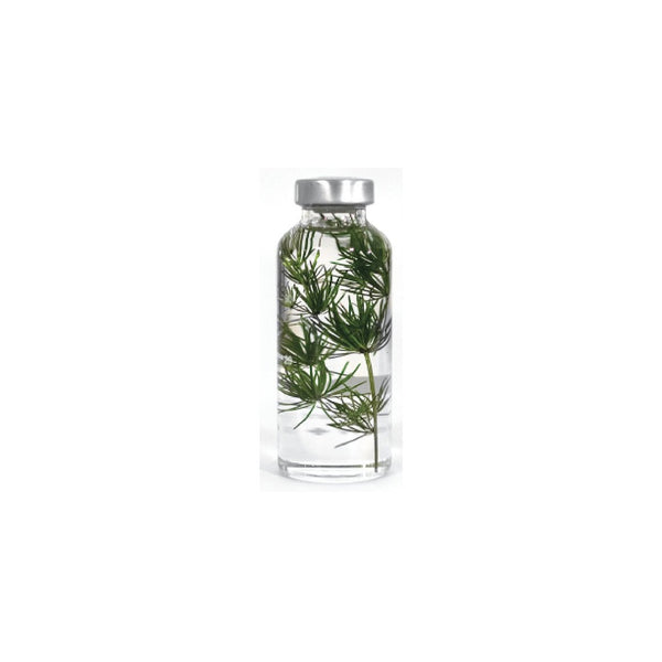 Slow Pharmacy SMALL BOTTLE PLANT No17 Plants Designobjekt Geschenk gift