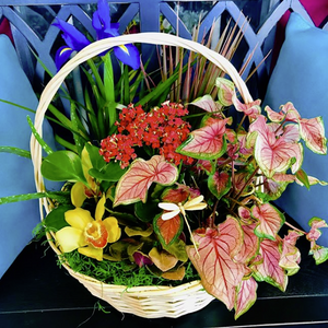 Customize Your Basket Garden Today!